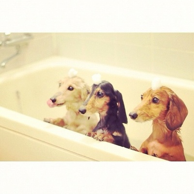 adorable and dogs image