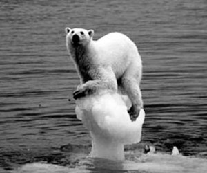global warming, Polar Bear, and what we did image