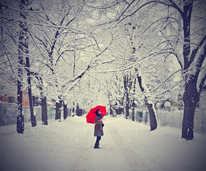 photography, red, and snow image