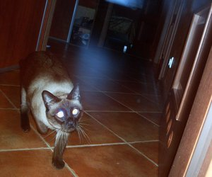 cat, eyes, and lights image
