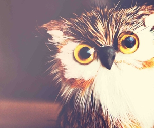 owl, cute, and retro image