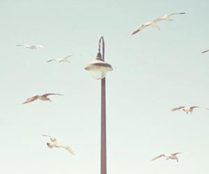 bird, blue, and image image