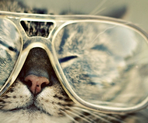 cat, glasses, and hipster image