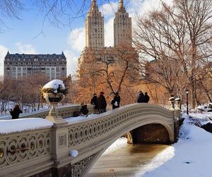 winter, new york, and nature image