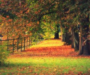 autumn and landscape image