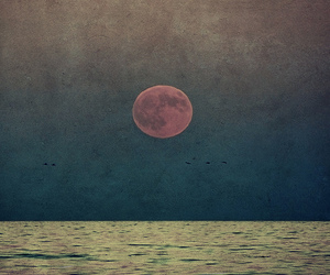 moon, sea, and bird image