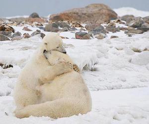 bear, animal, and hug image