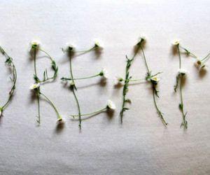 Dream and daisy image