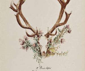 illustration, animal, and art image