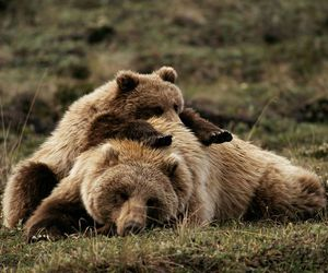 bear, animal, and mother image