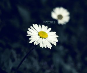 flower, grass, and macro image
