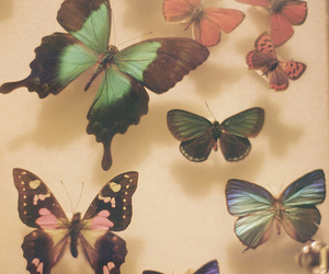 butterfly, vintage, and photo image