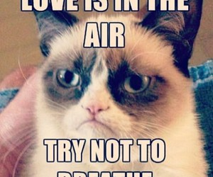 cat, love, and funny image
