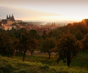 prague sunrise trees image