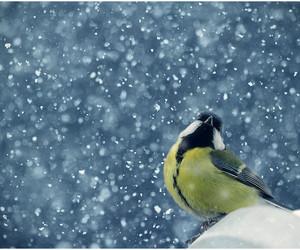 bird, snow, and djur image