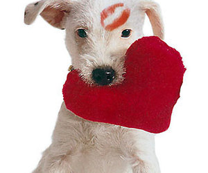 cute, dog, and heart image