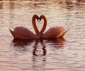 beautiful, heart, and nice image