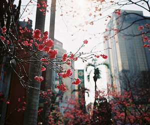 flowers, city, and beautiful image