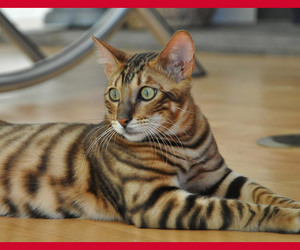 cat, breeds, and cats image