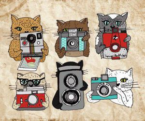 cat, camera, and photo image