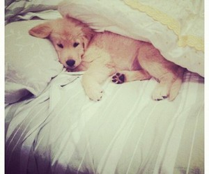 dog, cute, and bed image