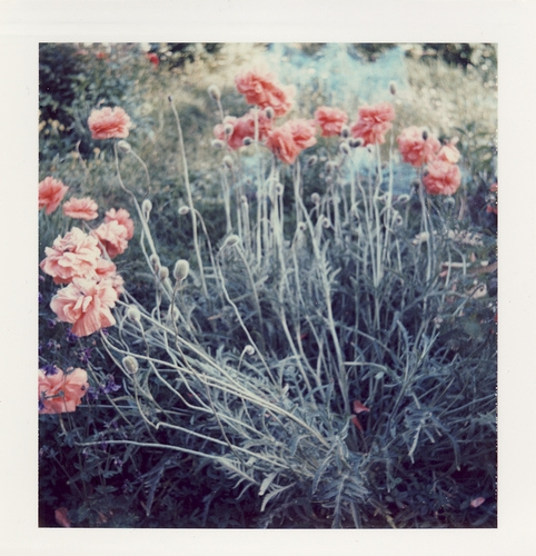 flowers, nature, and polaroid image