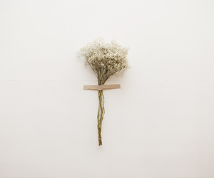 dried flower, minimalistic, and flower image