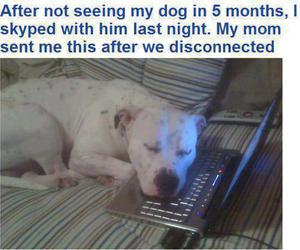 dog, skype, and quote image
