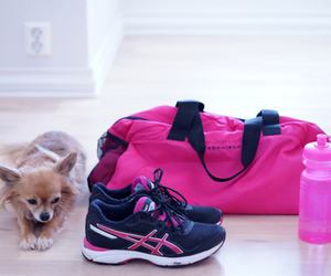 pink, dog, and fitness image