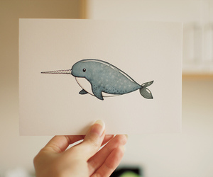 photography, narwhal, and drawing image