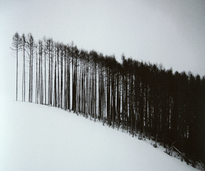 tree, black and white, and snow image