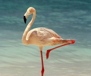 beach, animal, and flamingo image