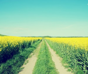 beautiful, blue sky, and country image