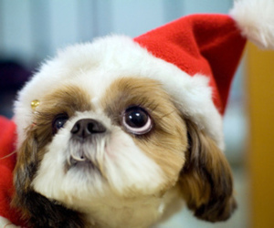 cute, dog, and christmas image