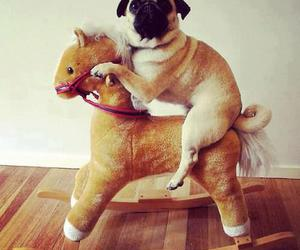 dog, cute, and horse image
