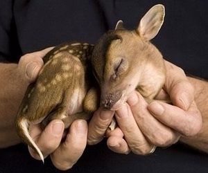 adorable, animal, and cute image
