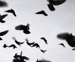 bird, black, and fly image