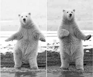bear, sexy, and dance image