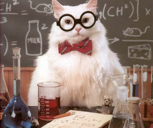 cat, chemistry, and glasses image