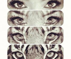 tiger, eyes, and girl image