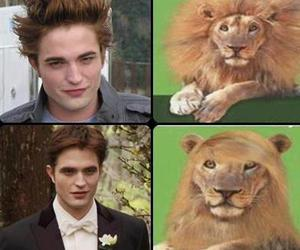 edward cullen, nice, and funny image