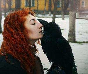 beautiful, bird, and raven image