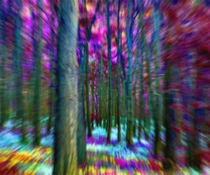 forest, run, and tree image