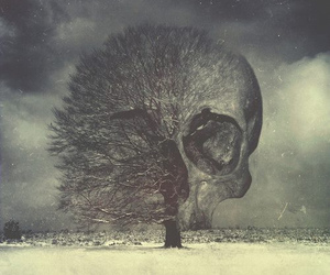 skull, tree, and dark image