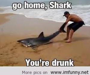 drunk, funny, and shark image