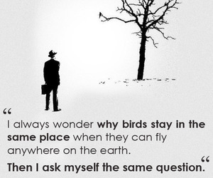 birds, quotes, and fly image