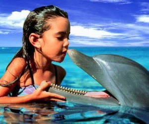 dolphin and girl image