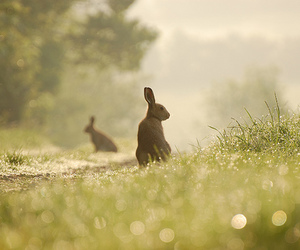 Image by the white bunny