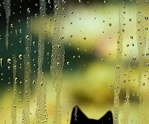 cats, photo, and cute image