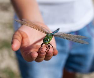 animal, bug, and dragonfly image